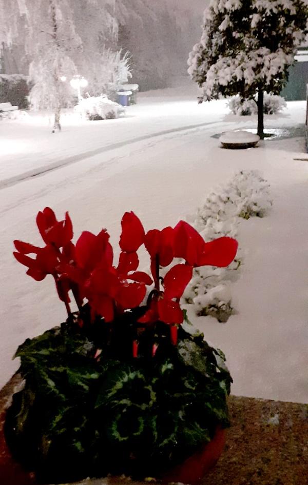 Neve a Vedano